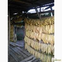 Табак листовой