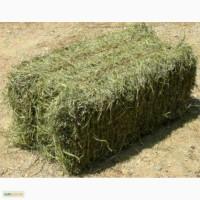 Продам сено в тюках люцерка, и есть отдельно разнотравье, пырей