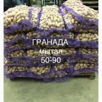 Картофель гранада! Осталось 80 тонн! Спешите