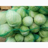 Продам белокачанную капусту