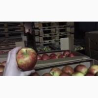 Продам яблоки оптом со склада николаев