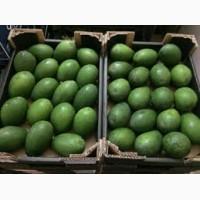 Продаем авокадо, оптом, мелким оптом