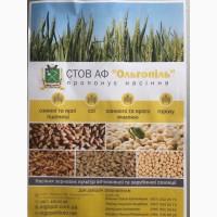 Продам високоякісне насіння зернових культур