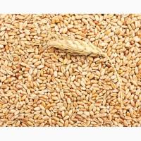 Экспорт Пшеница 2.3.4.5. класс FOB