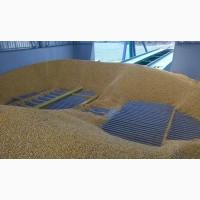 Куплю пшеницю фураж