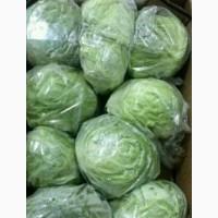 Продам салат Айсберг оптом