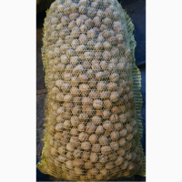 Грецкий орех