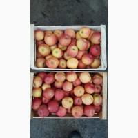 Продам яблоки, сорт Фуджи