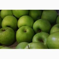 Продам яблука врожаю 2018 р