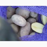 Картофель королева анна, гала, бриз