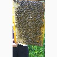 Бджоломатки Карпатка 2020 года Пчелинная Матка (пчеломатки)