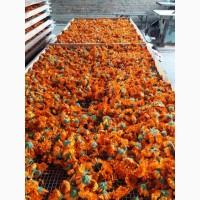 Календула цвет сушенный урожай 2020