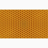 Куплю мед оптом в Хмельницькій, Тернопільській, Вінницькій та сусідніх областях