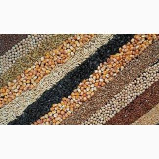 Услуги по очистке, сушке, фасовке - зерновых, масличных, бобовых