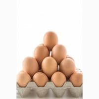 Реализуем инкубационные яйца Кобб-500