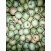 Продам яблуко для сушки чи пюре сорту Голден