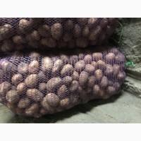 Продам насіннєву картоплю Арізона та Беларосса