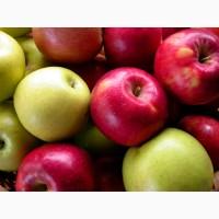 Предприятие закупает яблоки на переработку по всей Украине. Дорого