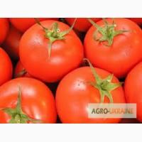 Продам помидоры Польша