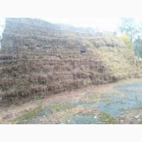 Тюки пшеничної соломи 15 грн