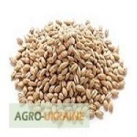 Семена канадского ячменя. Ярые сорта. Продажа от 500 кг