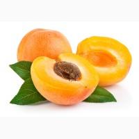 Абрикоса подвой алыча абрикос пумиселект Питомник выращивает саженцы плодовых деревьев опт