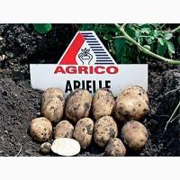 Продам продовольственный картофель в больших объемах