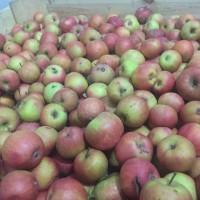 Продам яблука з холодильника