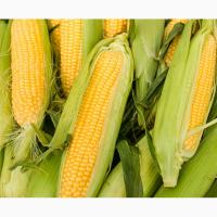 Семена кукурузы Монсанто ДКС 3420 ФАО 280
