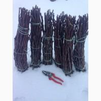 Продам живці (черенки) черешні, вишні, з сортовою гарантією та доброю якістю