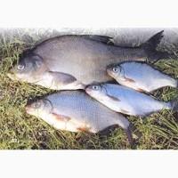 Рыба охложденая в ассортименте