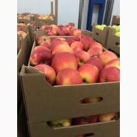 Яблука різних сортів. Холодильник Смарт фреш