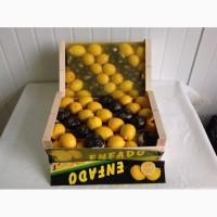 Продаем лимон, мандарин прямые поставки