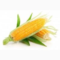 Покупаю кукурузу дорого