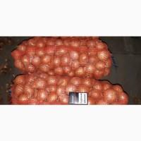 Продам лук сорт Баско урожай 2019 года калибр 5-7