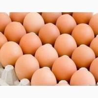 Оптовая продажа куриного яйца с доставкой по всей территории Украины