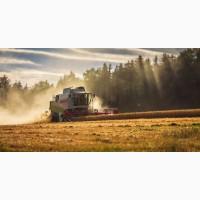 Комбайны на услуги уборки пшеницы, рапса