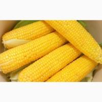 Семена кукурузы СИ Юнитоп