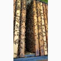Продам пчелопакеты порода Карника