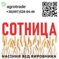 Элитные семена озимой пшеницы Сотница от производителя ...