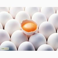 Продам яйцо куриное оптом