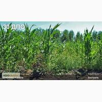 Новый послевсходовый гербицид Элюмис, Увидеть и поверить, Доступная цена, 400грн, л. Скидки
