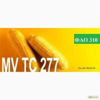 Семена кукурузы Венгерской селекции МВ 277 (ФАО 310)