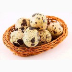 Продаю свежие перепелиные яйца