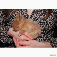 Декоративные кролики различный окрас