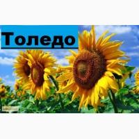 ГРАН» пропонує насіння соняшнику (гібрид) «Толедо»
