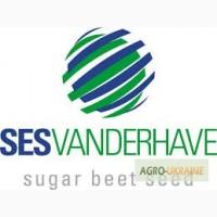 Семена сахарной свеклы СЕСВандерХаве Бельгия