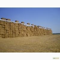 Тены для зерна 15 х 20