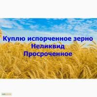 Куплю зерно неликвидное, испорченное, просроченное