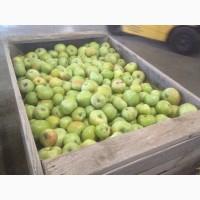 Яблоки и груши оптом